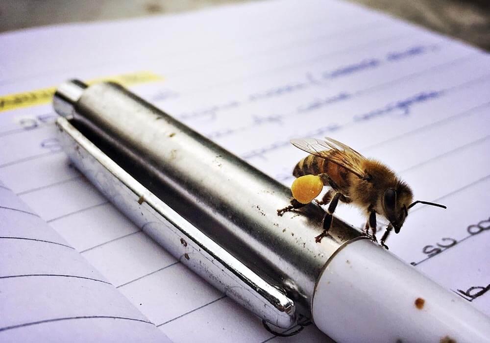 Il peso di un'ape