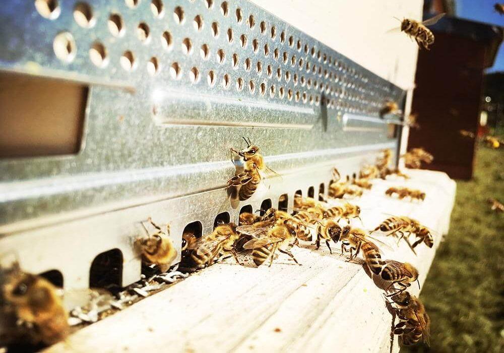 Non pensate di fare soldi facilmente con le api