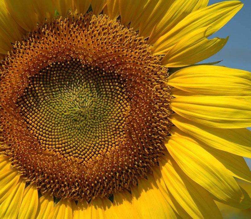 Fiori per api e insetti impollinatori