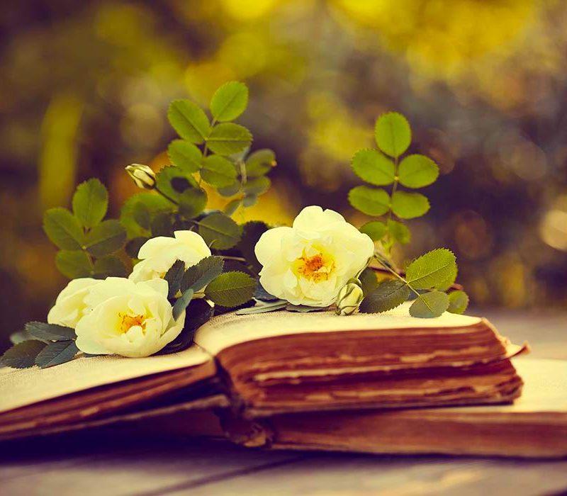 Erbe selvatiche commestibili libri